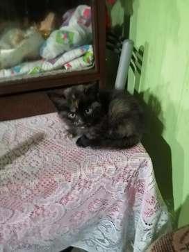 Pequeños gatos de compañía
