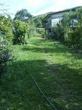 Se vende finca de 8 hectáreas