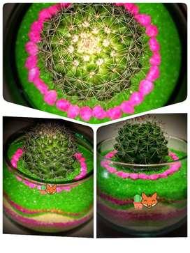 Cactus personalizado