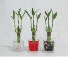 Diseños Lucky Bambu