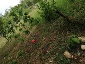 lote en la mesa San Joaquín con árboles frutales sobre vía principal. bien ubicado