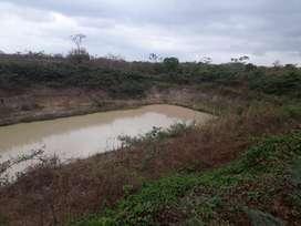 Finca de 38 hectareas a 20 minutos de palenque