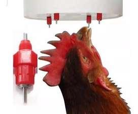 Bebedero automático para pollos