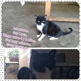 Hermosos gatos en adopción responsable jovenes adultos castrados.