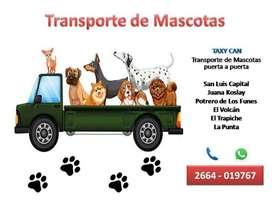 Taxy Can: Transporte de Mascotas