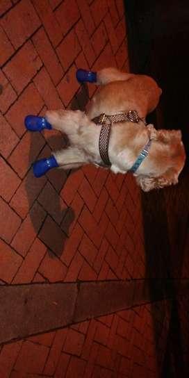 Lindos Zapatos para Perros