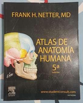 Anatomia Netter