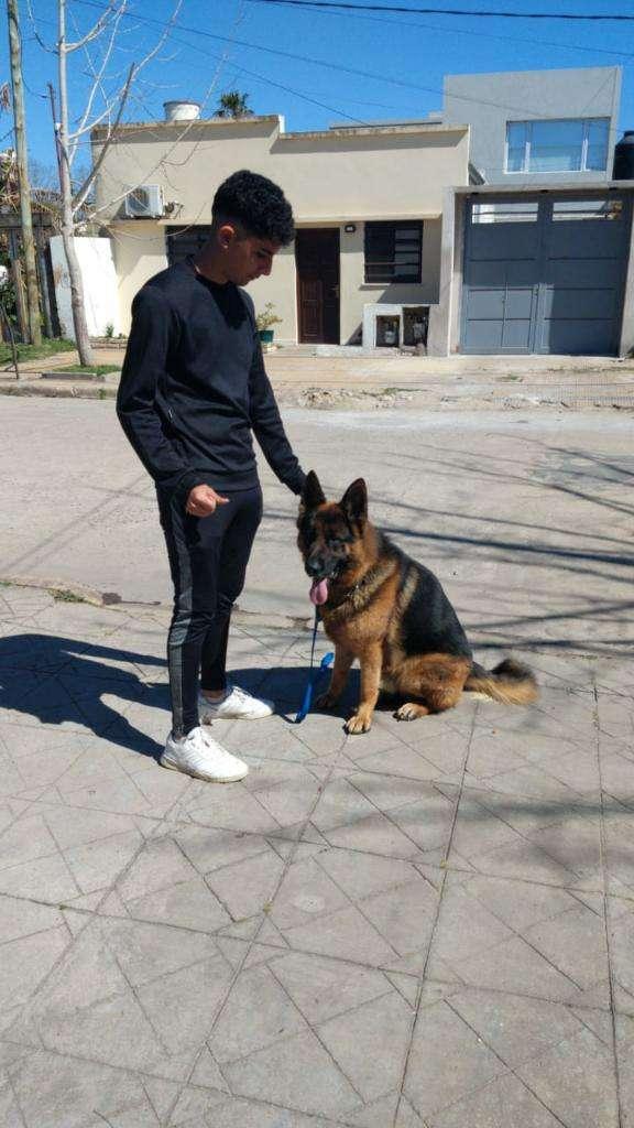 Adiestramiento Canino 0