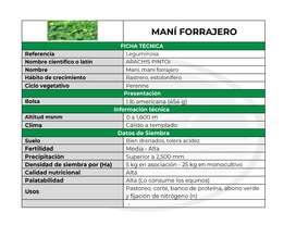 Venta de semillas de Maní Forrajero