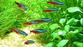 peces pack amazonico 4 discos 100 neones) =160