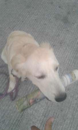 Adestramiento canino y paseo de mascotas