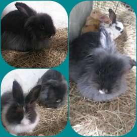 Conejos de todo Raza