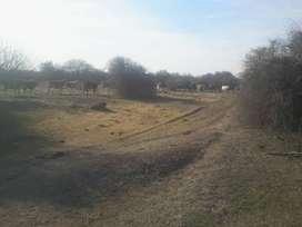 Vendo 175 has.Excelente suelo agricola-gandero En Dpto J.F Ibarra Sobre Ruta Interprovincial