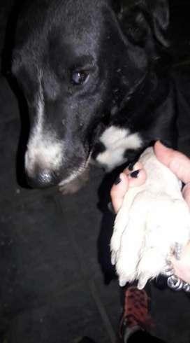 Doy en Adopcion Perro Muy Buen Cuidador