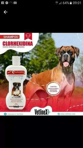 Shampoo medicado para perros
