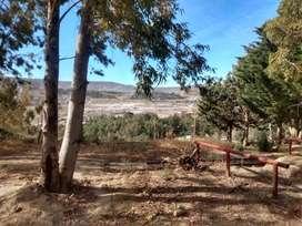 Terreno 12 x 42m2 Forestado