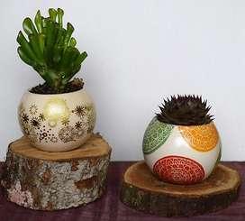 Macetas con decoración variada y planta suculenta