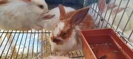 Conejos varios