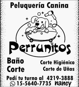Servicio de Peluqueria Canina