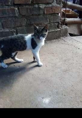 Gatico abandonado busca  hogar