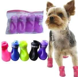 Zapato para perro