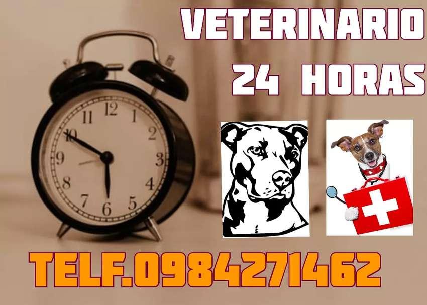 Médico veterinario a domicilio  24 horas 0