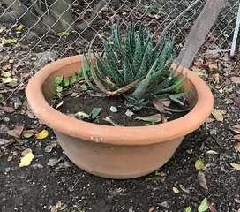 Maceta gigante con cactus