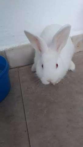 Vendo dos conejos de 3 meses