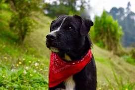 en adopcion perro: boliqueso