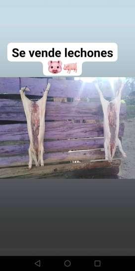 Se vende lechones