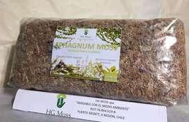 Musgo Spagnum