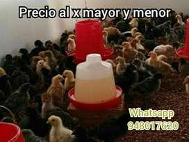 Pollos Y Patos Vacunados