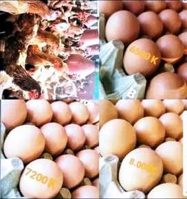 Huevos de excelente calidad