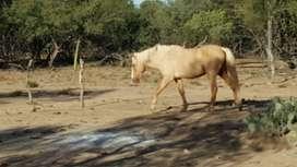 Campo en Bañado de Soto