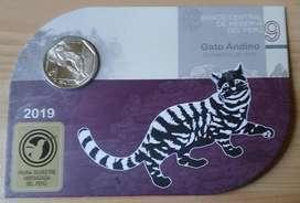 Blister Gato Andino