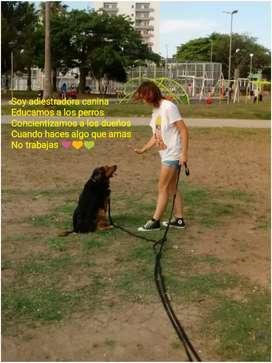 Adiestramiento canino san nicolas