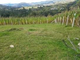 En venta lotes o sitios de terreno amplios en Gualaceo sector San antonio muy cerca de la escuela del milenium