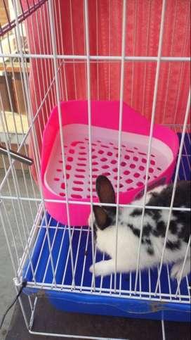 vendo conejo de raza chica