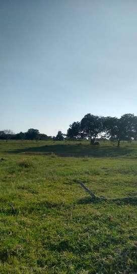 Hermosa Finca ganadera 70 hectáreas