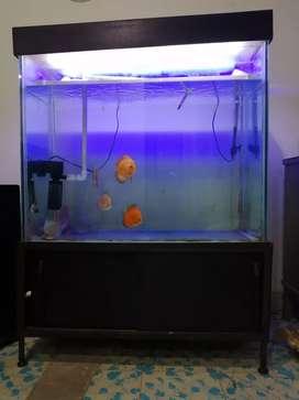 Acuario de peces disco