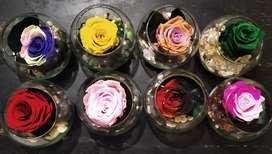 Hermosas rosas eternas