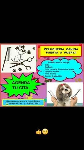 PELUQUERIA CANINA PUERTA A PUERTA (VALLE DE LOS CHILLOS).