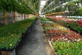 Vivero  Venta de Prados y Plantas