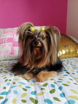 Peluqueria Canina en Casa (domicilio)