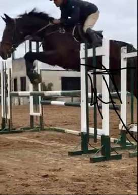 Yegua de salto