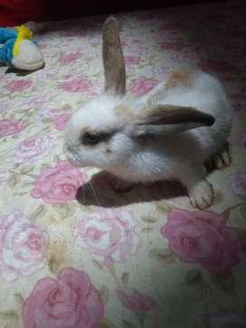 Se vende conejo $26.000