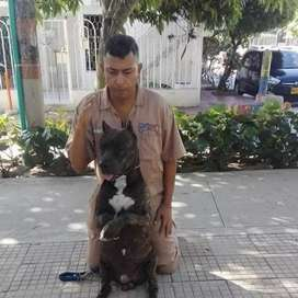 K-9 Elite Escuela de Adiestramiento canino internacional