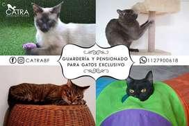 Guarderia y pensionado felino - Cuidado de gatos
