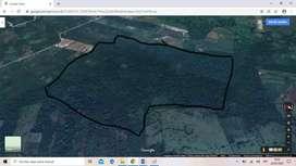 Terreno de 66 hectáreas, Tingo María.