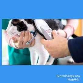 Microchip de Identificación para Gatos.